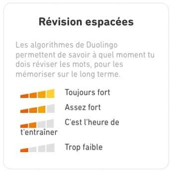 Révisions espacées grâce à l'algorythme Duolingo