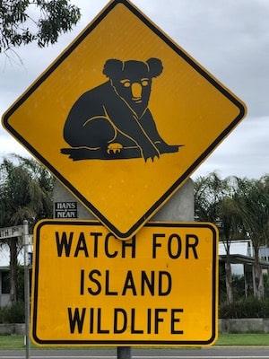 Un panneau avec un koala découvert par des enfants en expatriation en Australie