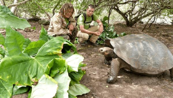 Un jeune bénévole travaille sur une mission de protection des tortues